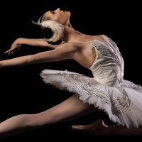 Swan-Lake---Beckanne-black
